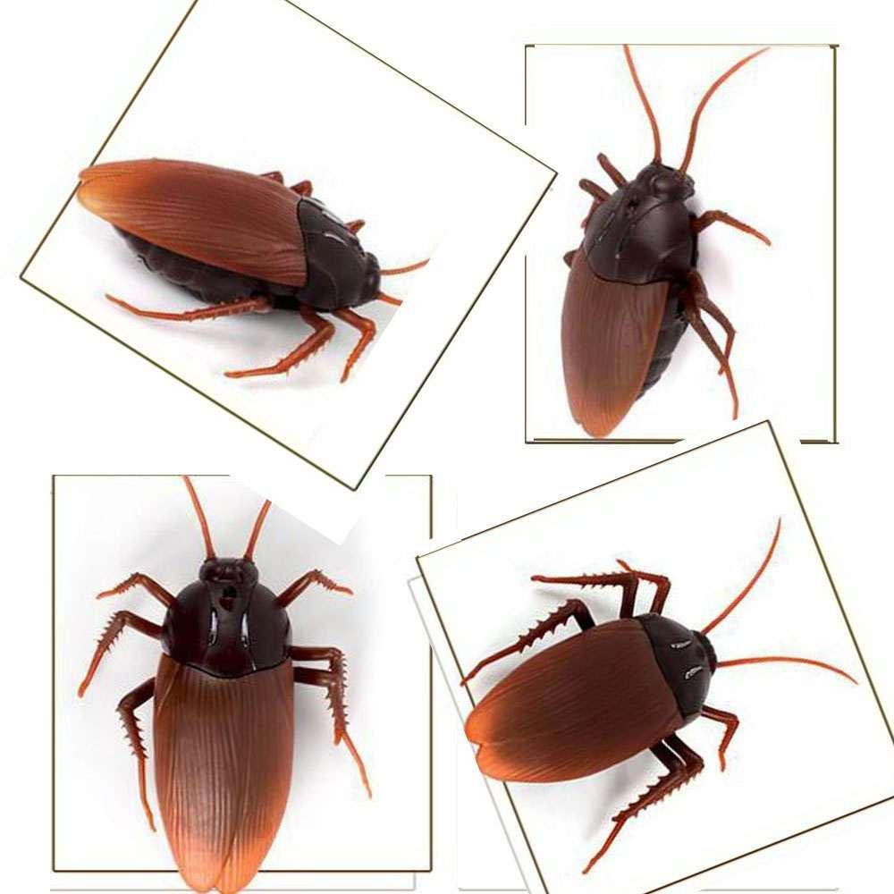 Remote Control Cockroach | DudeIWantThat.com