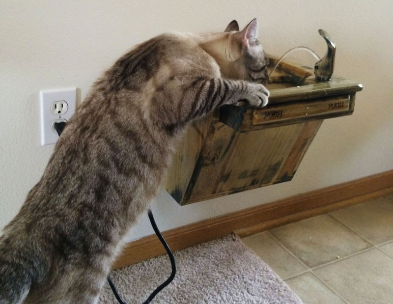 Cat Drinking Fountain | DudeIWantThat.com