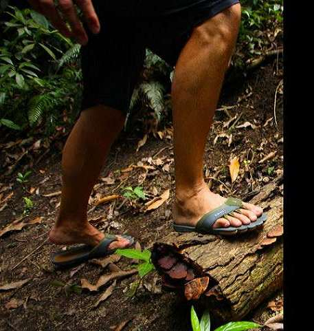 fb3a4326f05aa 5-Toe Flip-Flops | DudeIWantThat.com