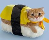 SushiCat
