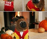 Top 10 Halloween Costumes - Teen Wolf Dog