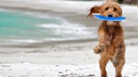 Better Than His Tail: Top 9 Toys to Occupy Your Dog