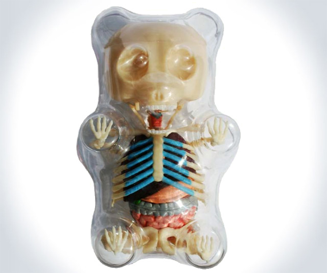 Anatomical Gummi Bear in Clear