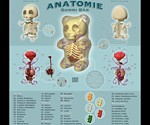 Anatomical Gummi Bear Poster