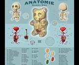 Anatomical Gummi Bear Poster