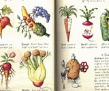 Codex Seraphinianus: The Strangest Book Ever Made