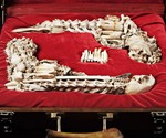 Bone Pistols in Presentation Case