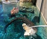 Cage of Death Crocodile Dive