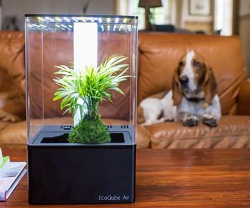 EcoQube Air Desktop Greenhouse