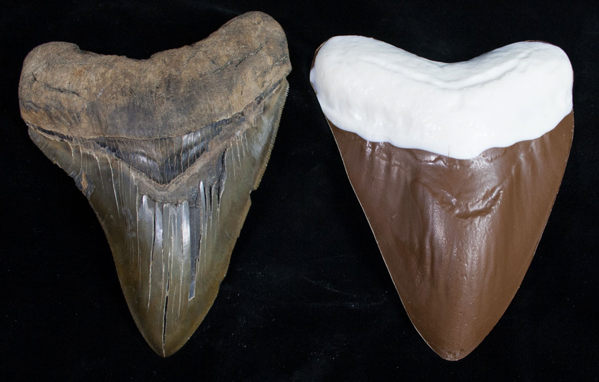 Chocolate Megalodon Shark Teeth | DudeIWantThat.com