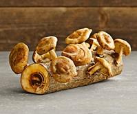 Mushroom Log Kit