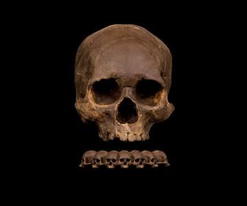Dark Chocolate Skull