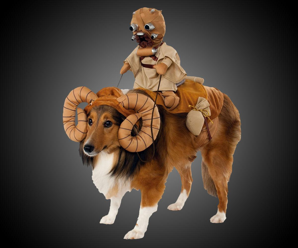 collie dressed as a bantha with tuskan raider