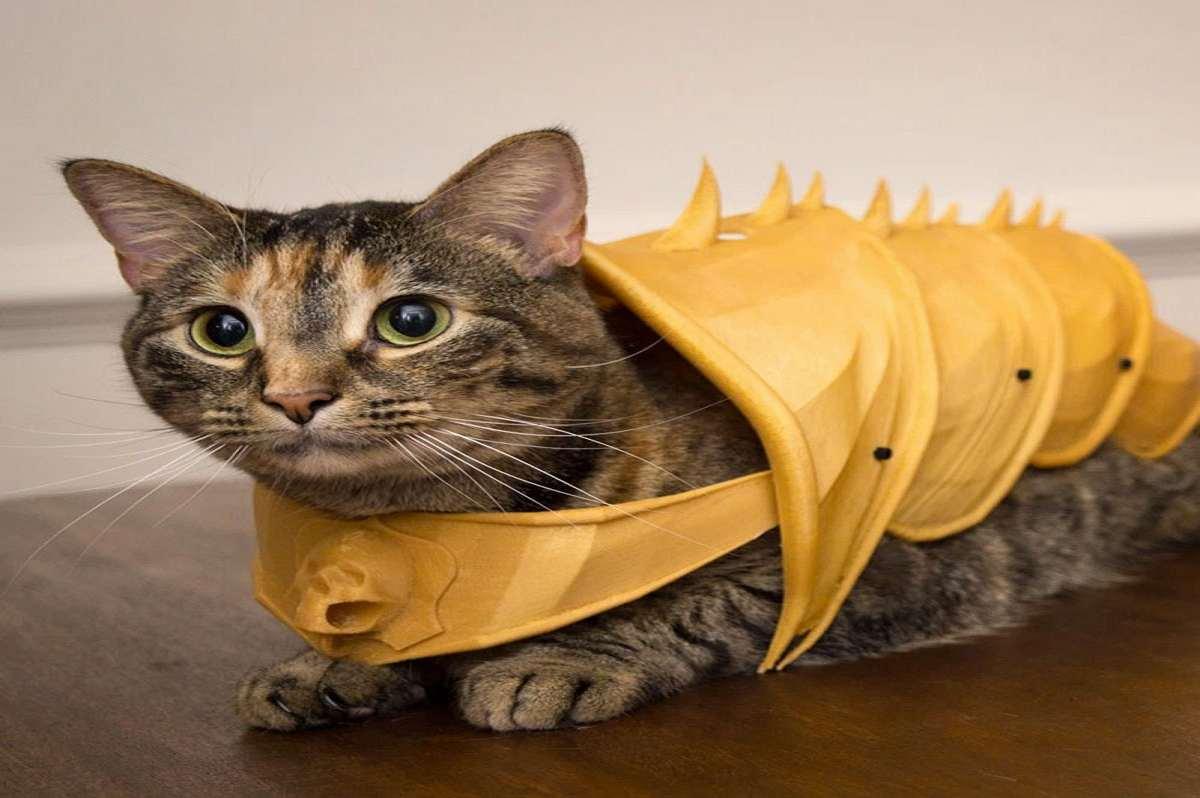 3d Printed Cat Armor Dudeiwantthat Com
