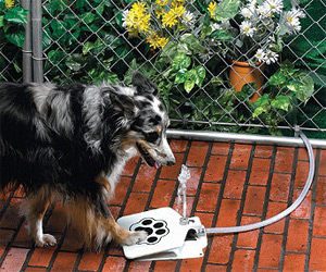 Bow Wow Water Fountain