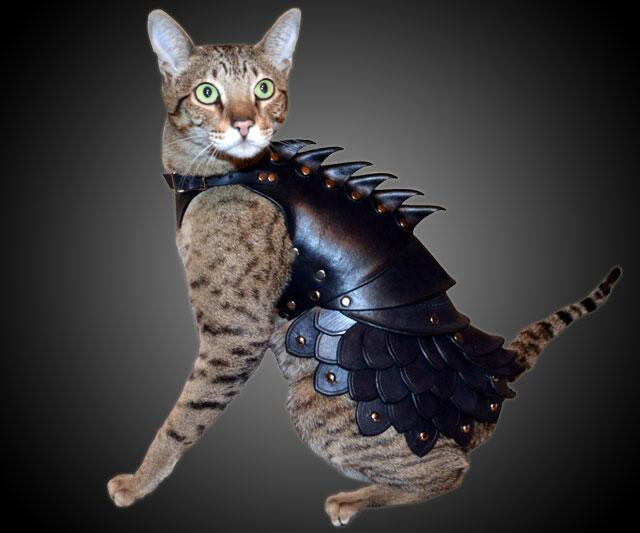 Battle Cats Best Uber To Evolve