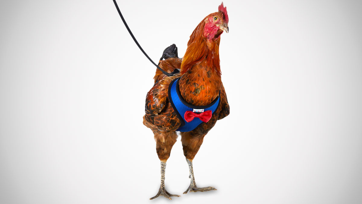 Chicken Harnesses