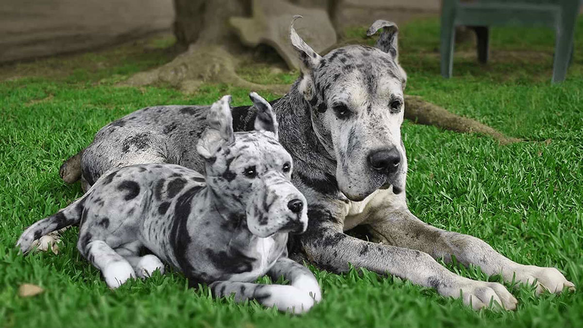 Cuddle Clones - Realistic Stuffed Versions of Your Pet
