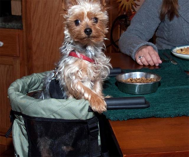 Dog High Chair   DudeIWantThat.com