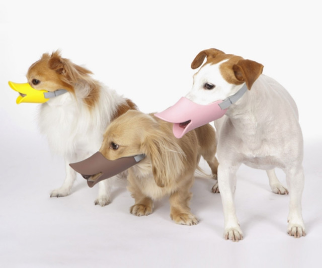 Image Result For Dog Muzzle Dog