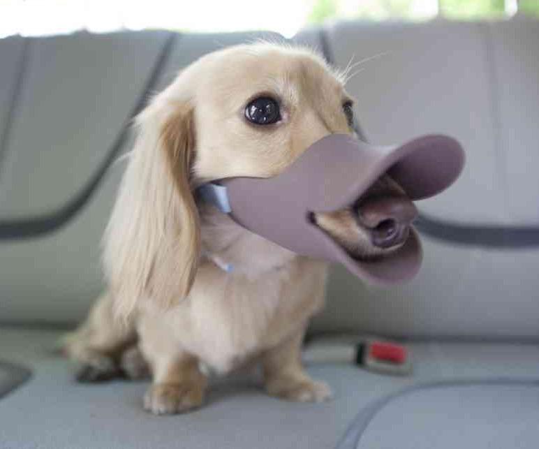 Soft Dog Muzzle Australia