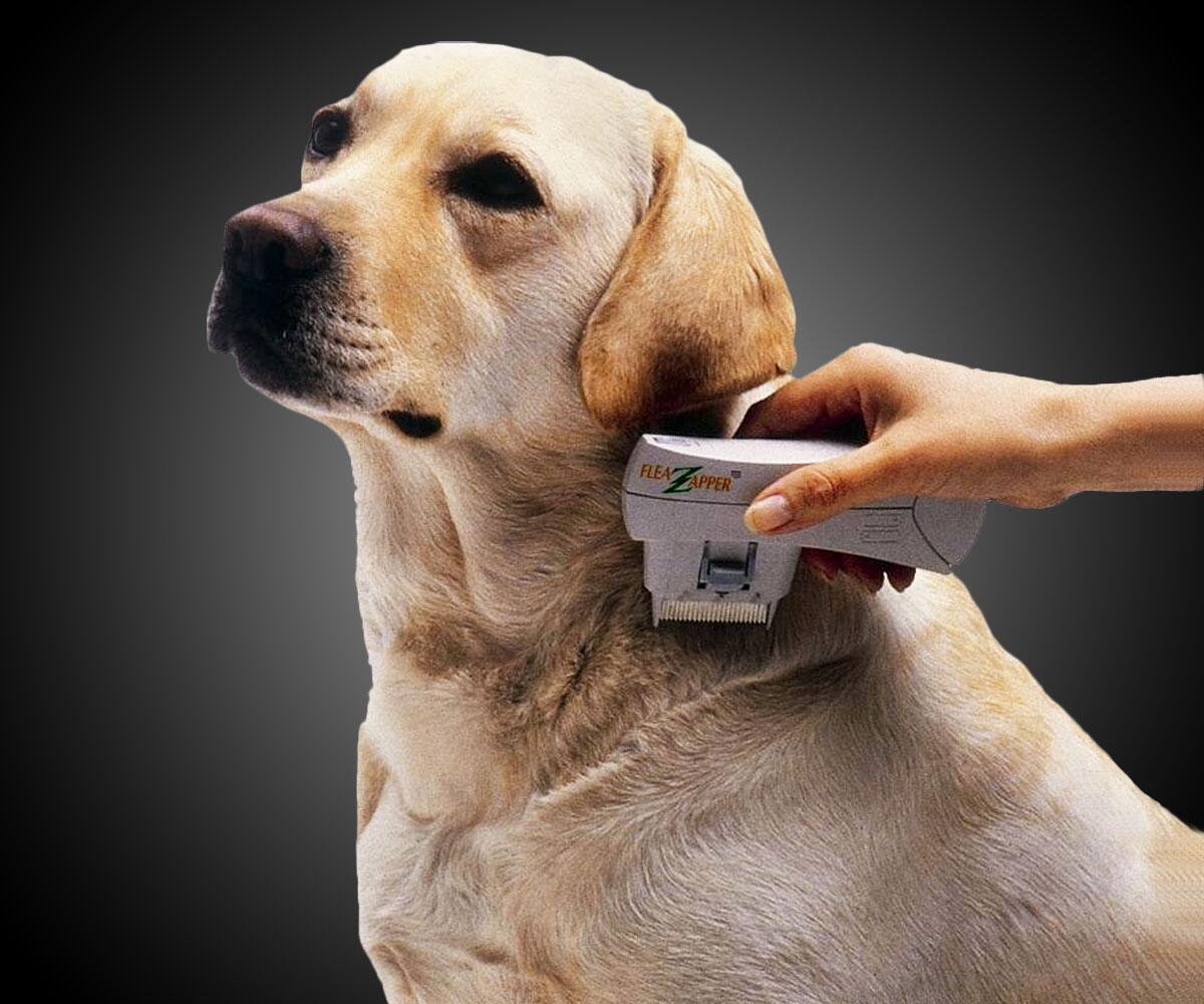 Best Dog Flea Shampoo Philippines