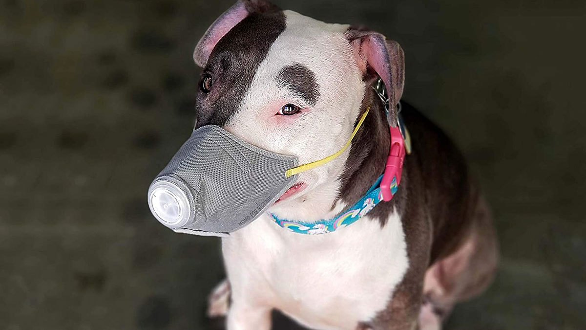 Face Mask for Dogs