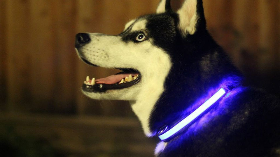 halo-led-pet-collar-8430.jpg