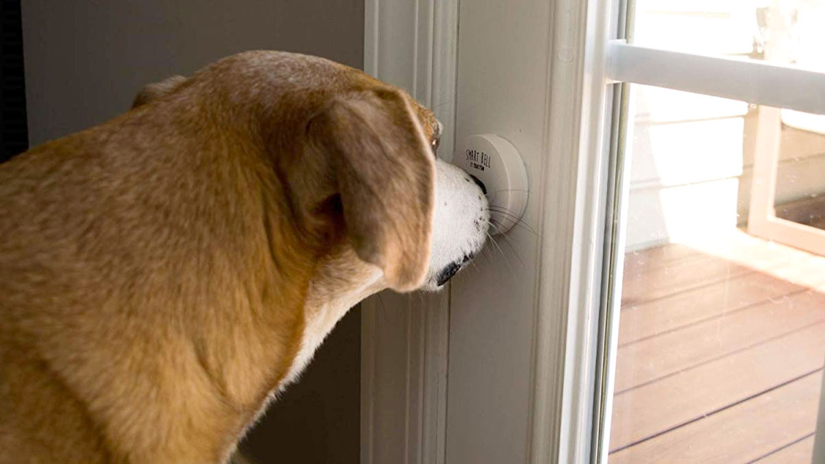 Mighty Paw Smart Bell for Dogs