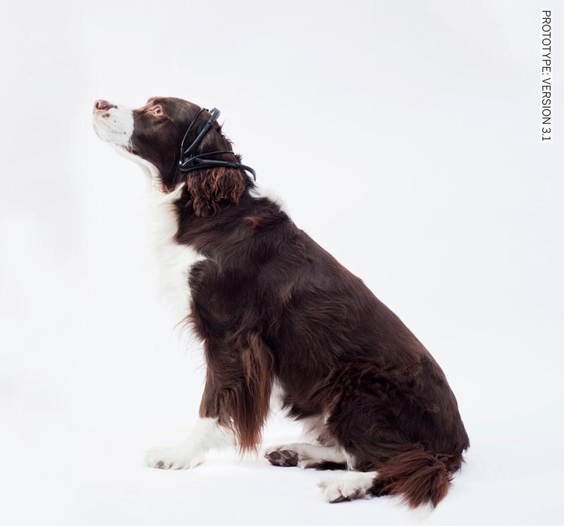 Dog Bark Translator Collar