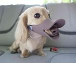Duckface Dog Muzzle