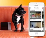 Petcube - Remote Interactive Pet Toy