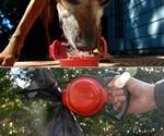Ruffbowl - Poop, Drink & Be Merry