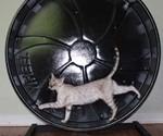 Cat Hamster Wheel
