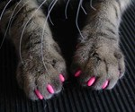 Soft Claws for Cats - Anti-Scratching Aid