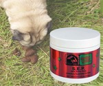 Stop Eating Poop Remedy for Dogs