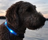 Blue glowdoggie Dog Collar