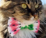 Bow Tie Cat Collars