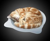Cat Cool Pot Bed Pet Cooling Tray