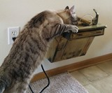 Cat Drinking Fountain