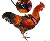 Chicken Harnesses