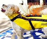 Image Result For Onetigris Tactical Dog