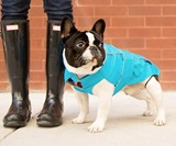 Django City Slicker Water-Repellent Dog Raincoat