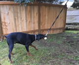 Doggie Bungee Toy