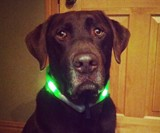 Green glowdoggie Dog Collar