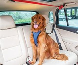 Happy Ride Backseat Dog Zipline