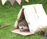 Hedgehog Carry House