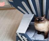 Iron Throne Cat Bed