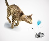 Mousr Interactive Robotic Cat Toy