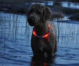 Red glowdoggie Dog Collar